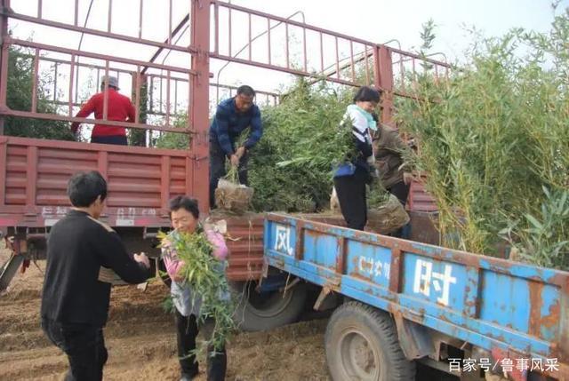 """肥城高新区深入实施""""竹绿矿区""""行动 千亩竹林生态美"""